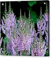 Garden Forest Acrylic Print