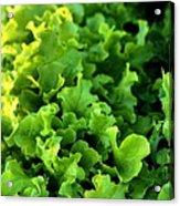 Garden Fresh Salad Bowl Lettuce Acrylic Print