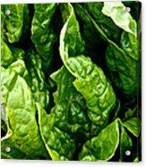 Garden Fresh Acrylic Print by Susan Herber