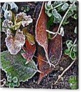 Garden Frost Acrylic Print