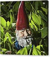 Garden Gnome No 0065 Acrylic Print