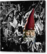 Garden Gnome With Gray Background Acrylic Print