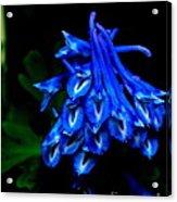 Garden Jewel Acrylic Print