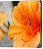 Garden Lily Acrylic Print