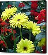 Garden Of Hope Acrylic Print