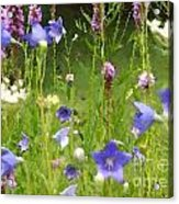 Garden On Bergey Road Detail Acrylic Print
