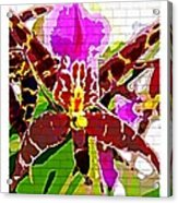 Garden Orchid Acrylic Print