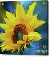 Garden Sun Acrylic Print