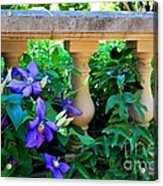 Garden Wall With Periwinkle Flowers Acrylic Print