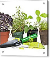 Gardening Tools And Plants Acrylic Print