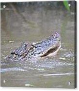 Gator In The Swamp Acrylic Print