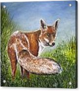 Gazing Fox Acrylic Print