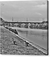 Geese Along The Schuylkill River Acrylic Print