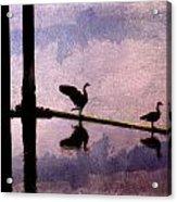 Geese At Dawn Acrylic Print