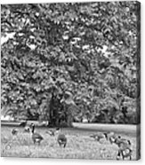 Geese By The River Acrylic Print by Bill Cannon