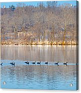 Geese In The Schuylkill River Acrylic Print
