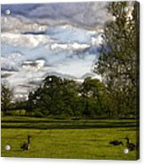 Geese On Painted Green 2 Acrylic Print