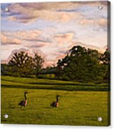 Geese On Painted Green Acrylic Print by Bill Tiepelman