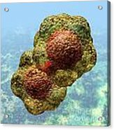 Geminivirus Particle Acrylic Print by Russell Kightley