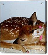 Gentle Soul Acrylic Print
