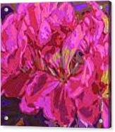 Geranium Pop Acrylic Print