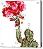 Geranium Sans Pot Acrylic Print