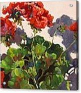Geraniums And Shadows Acrylic Print