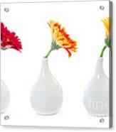 Gerbera Flowers In Vases Acrylic Print