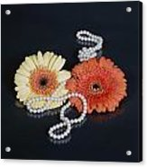 Gerberas With Pearls Acrylic Print