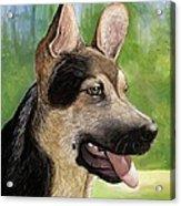German Shepard Puppy Acrylic Print