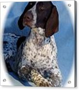 German Shorthaired Pointer 790 Acrylic Print