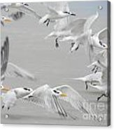 Get The Flock Outta Here Acrylic Print
