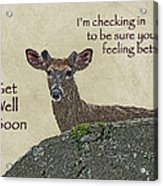 Get Well Card - Whitetail Deer In Velvet Acrylic Print