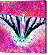 Ghost Butterfly Acrylic Print by Nick Gustafson