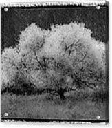 Ghost Tree Acrylic Print