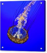 Ghostly Jellyfish Acrylic Print