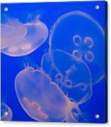 Ghostly Jellyfish Acrylic Print