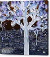 Ghostly Joshua Tree Acrylic Print
