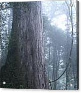 Giant In Fog Acrylic Print