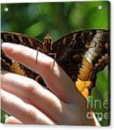 Giant Owl Butterfly In Hand Acrylic Print
