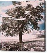 Giant Tree In City Acrylic Print