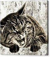 Giggle Kitty  Acrylic Print