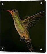 Gilded Hummingbird In Flight Acrylic Print