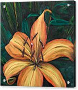 Gilded Lily Acrylic Print