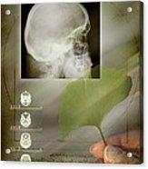 Ginkgo In Medicine Acrylic Print