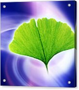 Ginkgo Leaf Acrylic Print by Pasieka