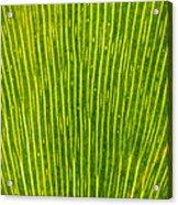 Ginko Tree Leaf Acrylic Print