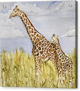 Giraffe And Calf Acrylic Print
