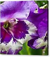 Gladiola Blossom 2 Acrylic Print