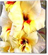 Gladiolus Mirage Acrylic Print